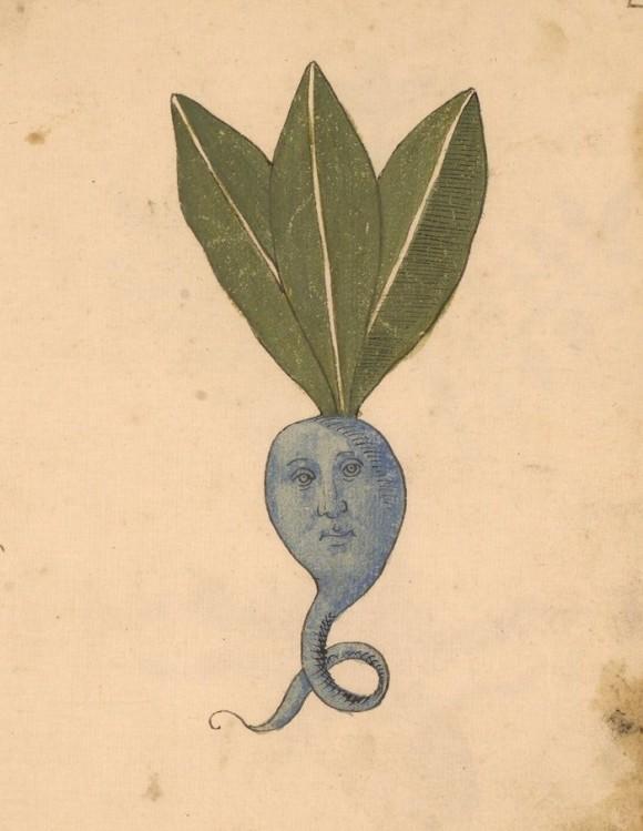 15世紀の植物手稿