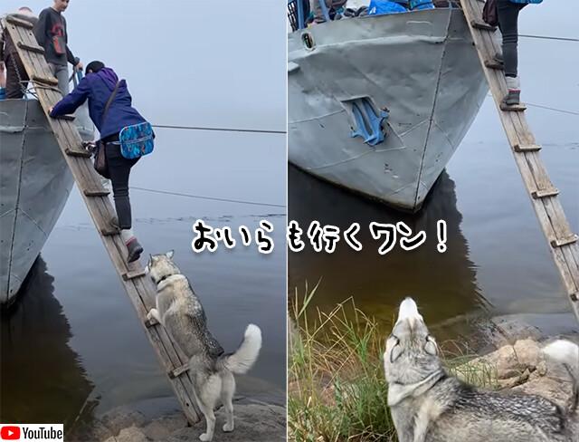 おいらも行くワン!人間と一緒にボートに乗るため、ひとりで梯子を登るハスキー犬