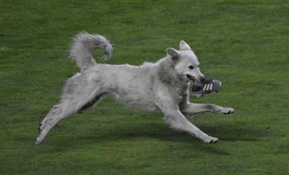 サッカーの試合中に乱入した犬、選手の飼い犬に