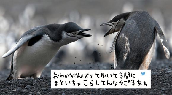 【ペンギン界の闇】妻の不倫現場を目撃した夫、不倫相手と血みどろの戦いを繰り広げるも、妻の出した結論は?※流血注意【修羅場】