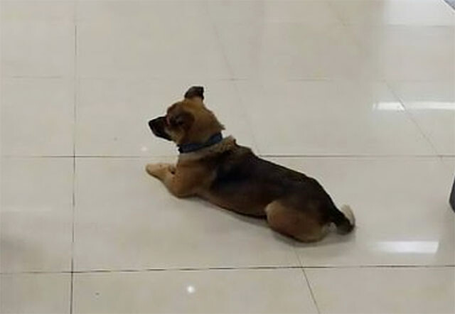 飼い主がコロナで亡くなったことを知らずに、病院で3か月待ち続けた犬(中国)