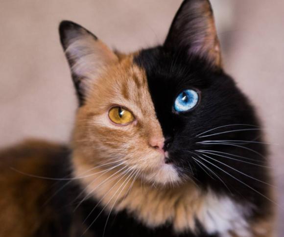 その名もキメラ。またしても2つの顔を持つ美しいダブルフェイス猫がインスタグラムで話題に(アルゼンチン)