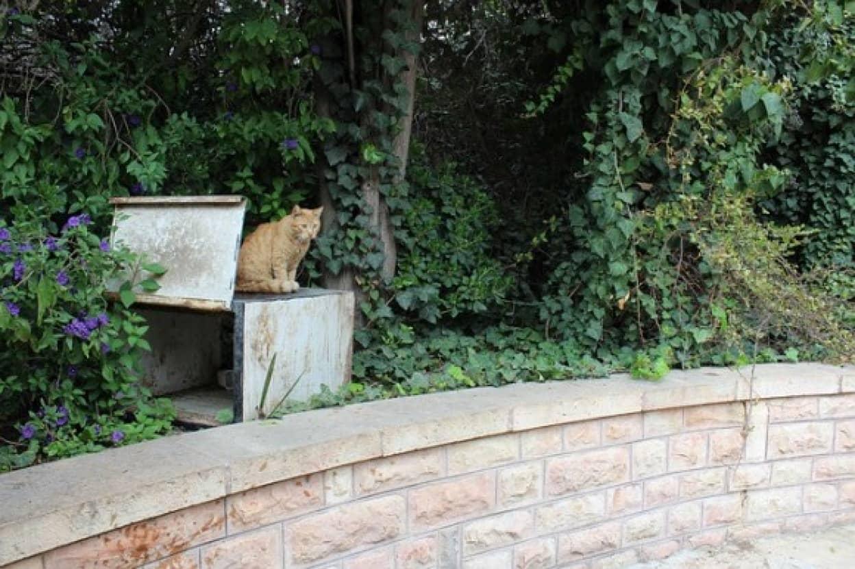 飼い主が亡くなりホームレスになった猫、せつないメモ書きと共に保護される