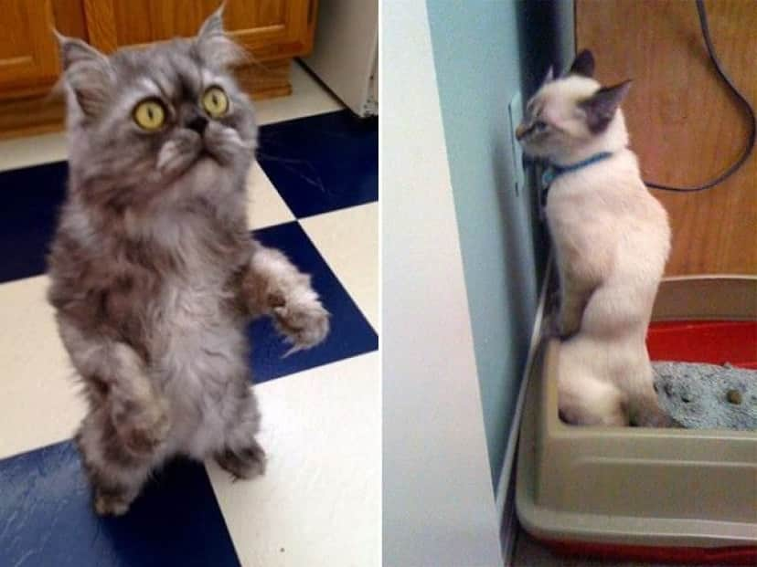 standing-cats13_e