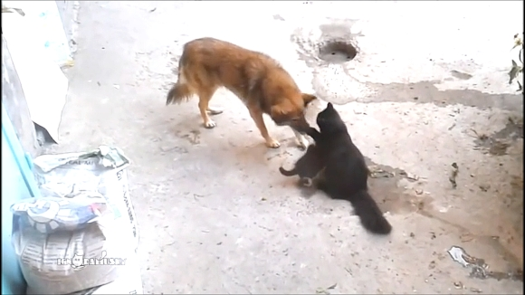 02_What This Dog Did_e