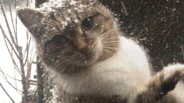 雪の日にやってきた野良猫たち、心優しい人々の手助けを得て無事に里親が決まる。