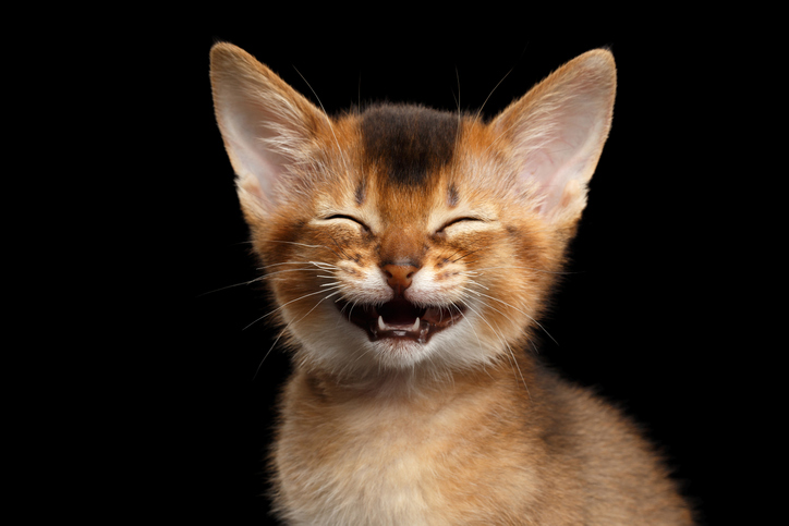 動物も楽しい時には笑う