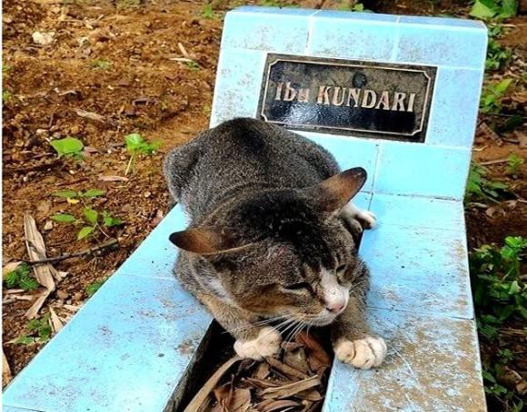 大親友がここにいるの。今は亡き飼い主の墓から離れようとしない猫(インドネシア)