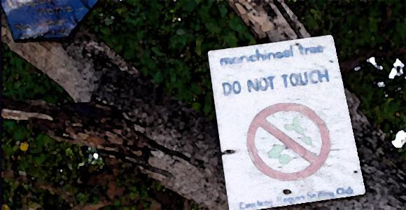 その木に近づくな!触るだけでも大惨事、世界で最も危険な樹「マンチニール」