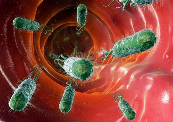 Microscop-Bacteria4