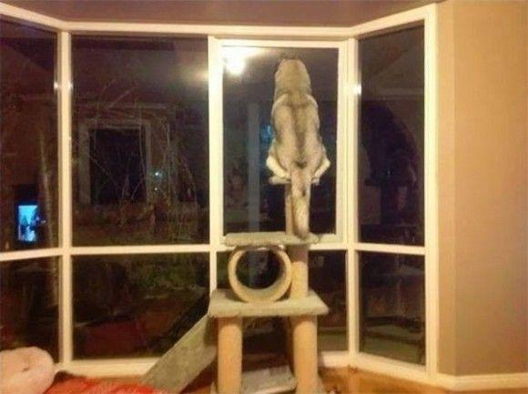 加速する犬の猫化。猫的挙動をする犬たちのいる風景。