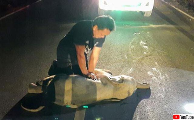 バイクにはねられたゾウの赤ちゃんが救急隊員の心臓マッサージで一命をとりとめる(タイ)