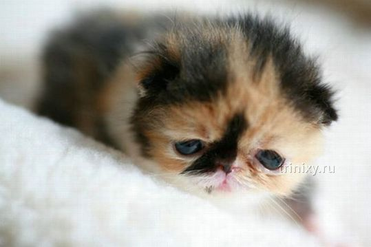adorable_tiny_kitten_04
