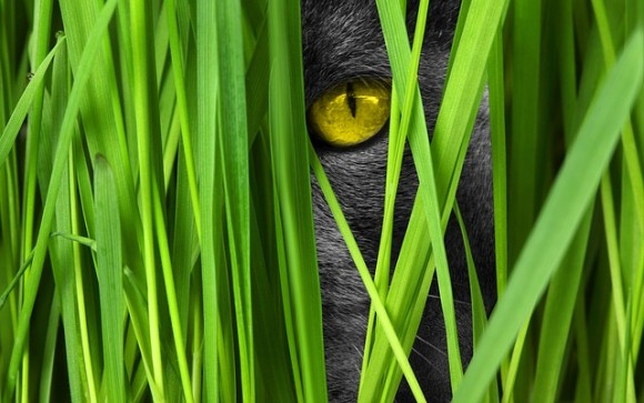 猫は死者をよみがえらせる?猫に関する世界7つの迷信