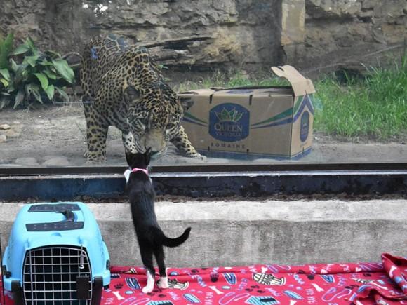 保護施設の犬と猫の遠足。コロナで休園中の動物園をのんびり見学(アメリカ)