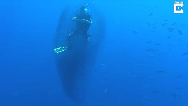 fishsurrounddiver1
