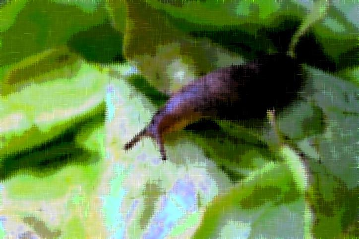 悪ふざけでナメクジを生で食べた男性が寄生虫に感染。8年の闘病の末に死亡(オーストラリア)