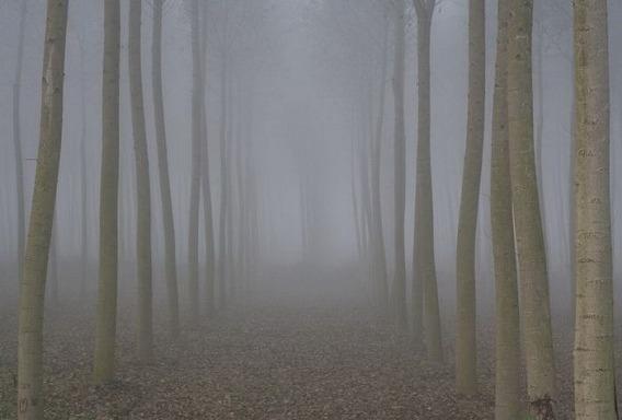 fog_06