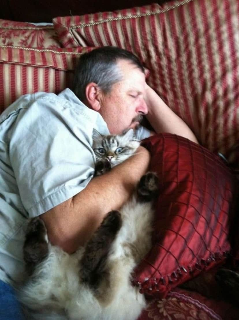 people-who-didnt-want-cats-14_e