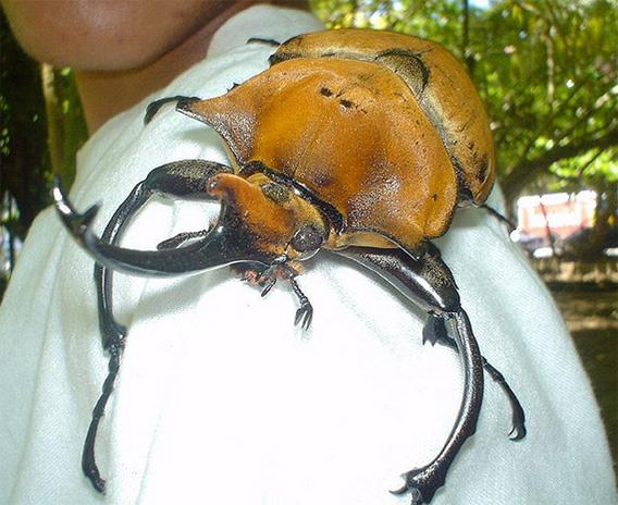 世界 一 でかい 寄生 虫 ジビエ料理の危険性!鹿食い寄生虫「ラセンウジバエ」の恐怖