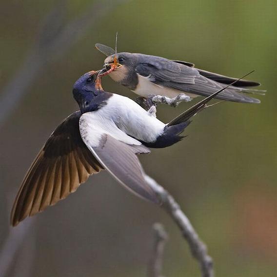 beautiful_photographs_of_birds_09