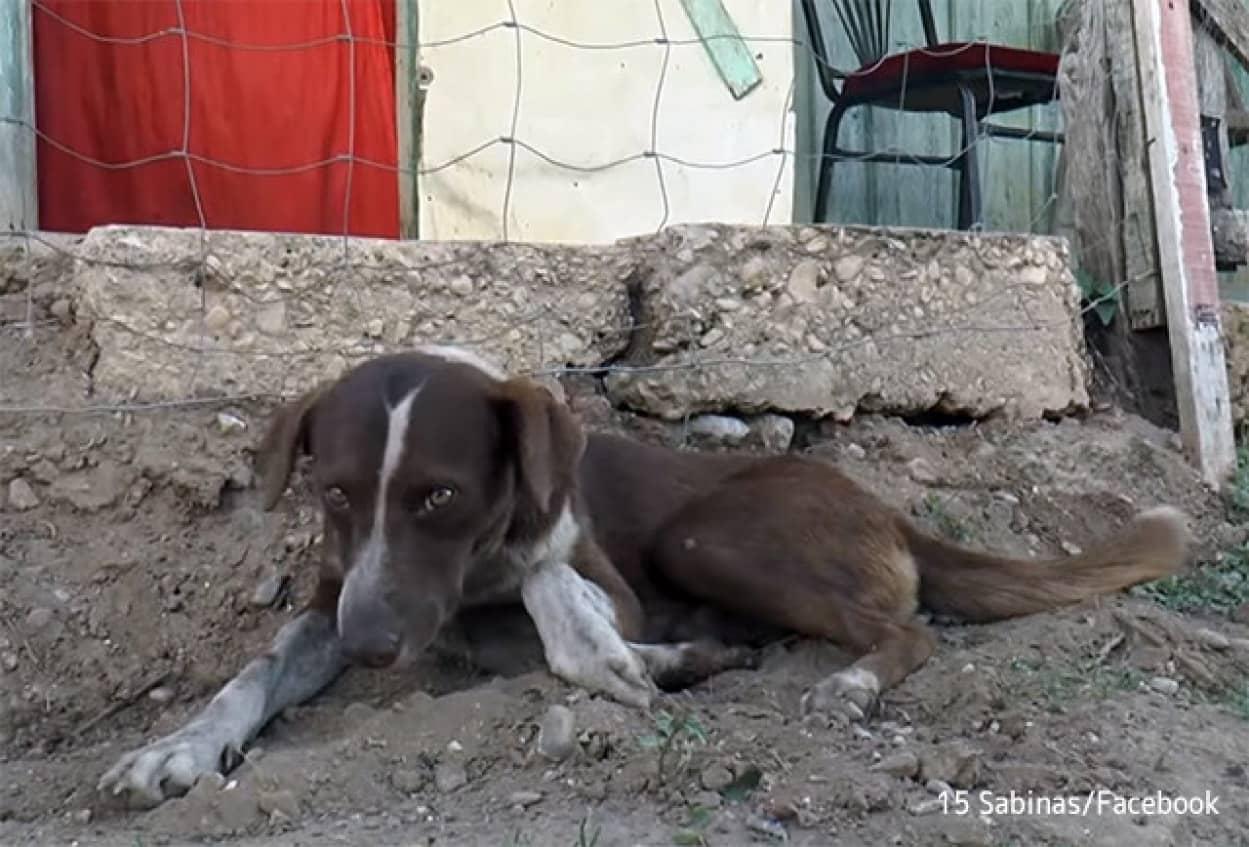 炭鉱事故で亡くなった飼い主に再び会うために、毎日炭鉱に通い続ける犬