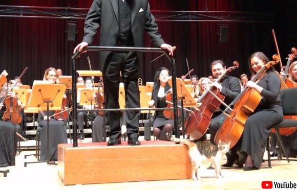 猫の国トルコだもの。オーケストラのステージに迷い込んだ野良猫、演奏中もステージ中央に鎮座
