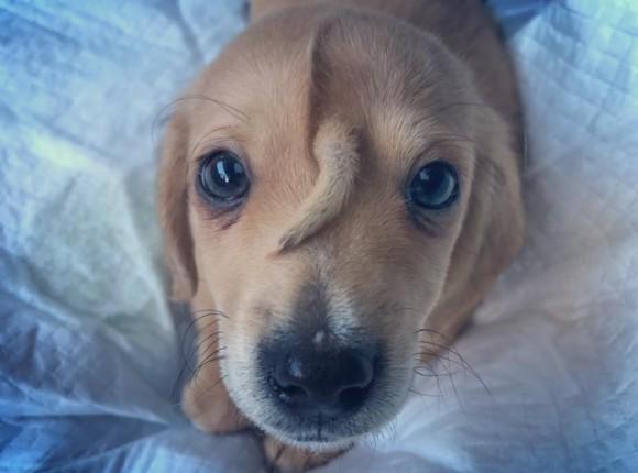【続報】額に尻尾が生えたユニコーン子犬、ついに永遠の飼い主を見つける(アメリカ)