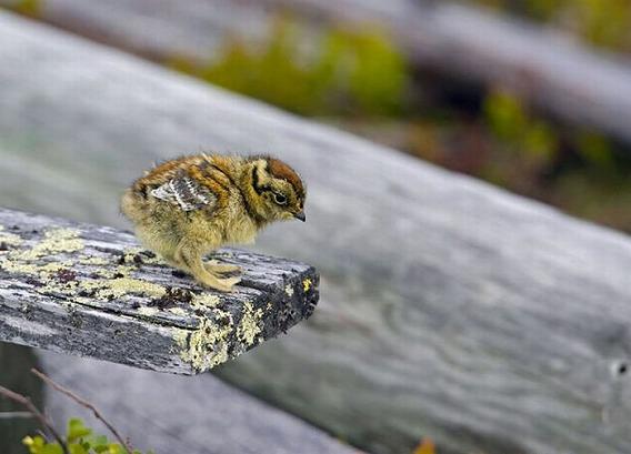 beautiful_photographs_of_birds_20