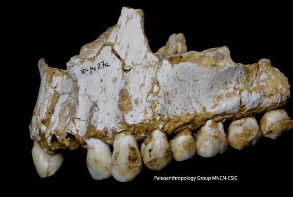 ネアンデルタール人の歯から抗生物質・鎮痛剤・ベジタリアン食の痕跡が発見される