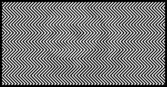 スマホで見ている人は有利かも。白黒のジグザグの線の中にいる動物は何?