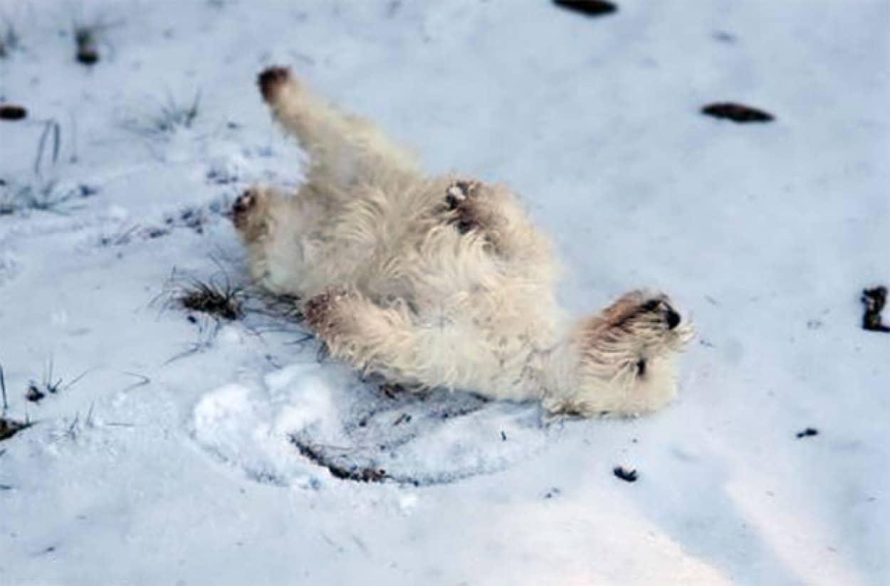 最後にもう一度だけ愛犬に雪を見せたい