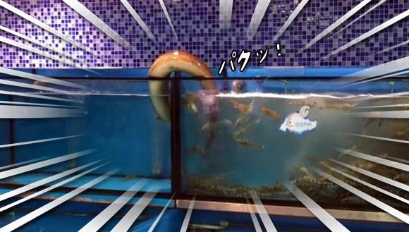 うまそうなのがいるじゃないか。隣の水槽のエビを盗み食いする為に移動する高機能ウナギが目撃される(シンガポール)