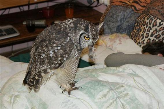 caring_owl_24
