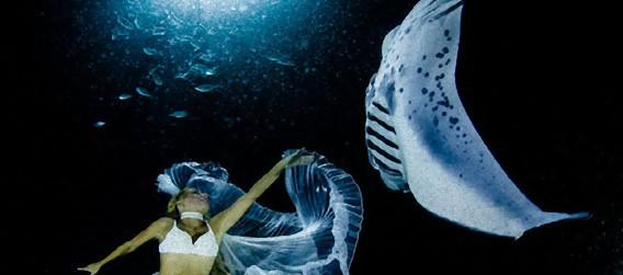 優雅な水中ファンタジー、マンタと女性ダンサーが水中で踊りの競演