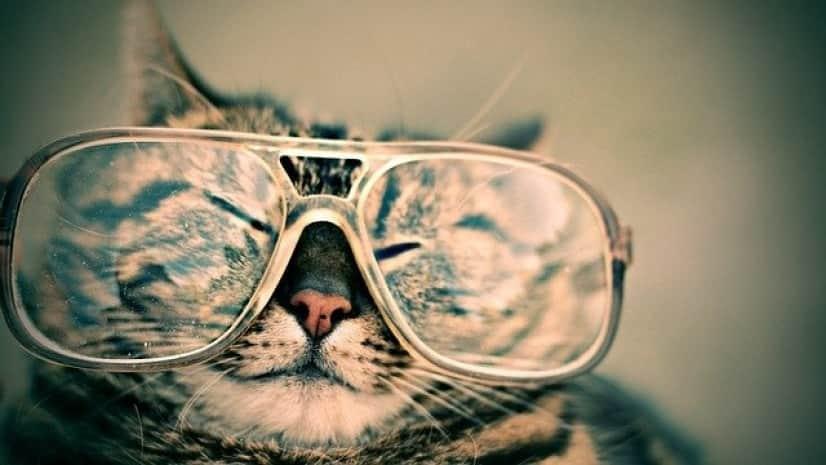 cat-984097_640