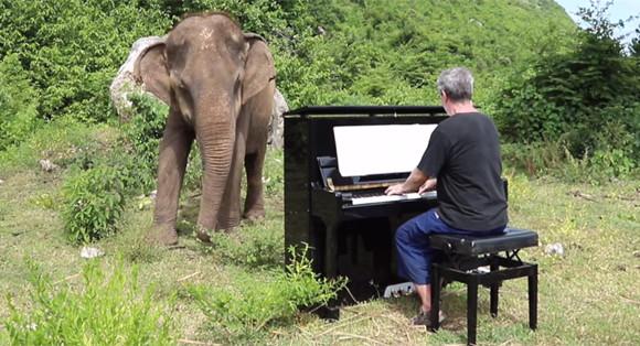 盲目の年老いたゾウに音楽を。ピアノでクラシックの生演奏を行ったところ、感動の反応が...(タイ)
