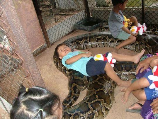giant_pet_snake_01
