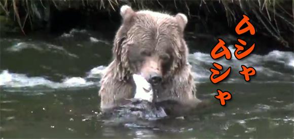 え?いつ捕った?一瞬にして魚を捕まえて食べるクマの映像
