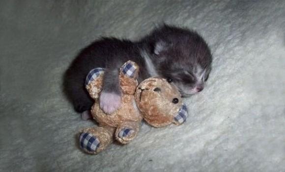 ぬいぐるみと寝る猫
