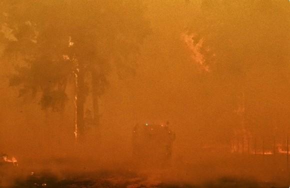 絶望が希望へ変わる瞬間。森林火災で行方不明となった犬の救出・再会物語(オーストラリア)