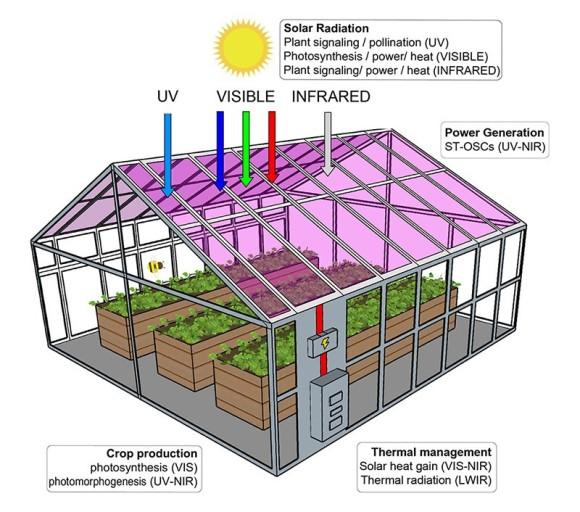有機太陽電池で透明な太陽光発電パネル