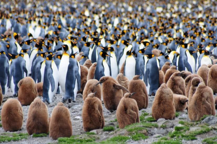 ペンギンから笑気ガス