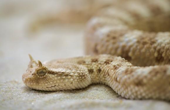 snake-208585_640_e