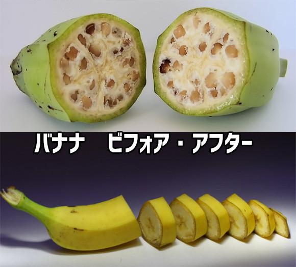 野菜・果物など、品種改良で大きく変化した10種の作物