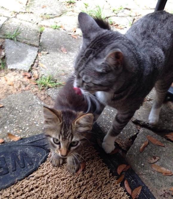猫が人のやさしさに触れた時、そのやさしさは伝搬する。捨て猫を拾ったらその捨て猫が捨て猫を拾ってきた物語