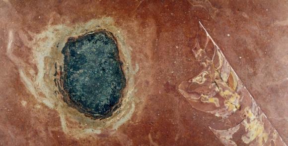 新種の隕石発見か? 太陽系の謎解明に一歩前進(スウェーデン)