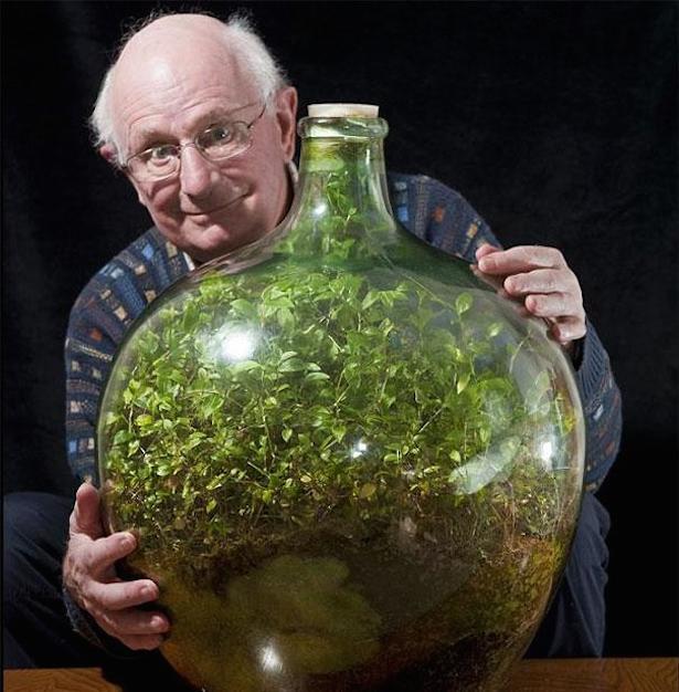 蓋をした瓶の中で40年以上。青々とした葉を保ちながら生き続けているツユクサのテラリウム