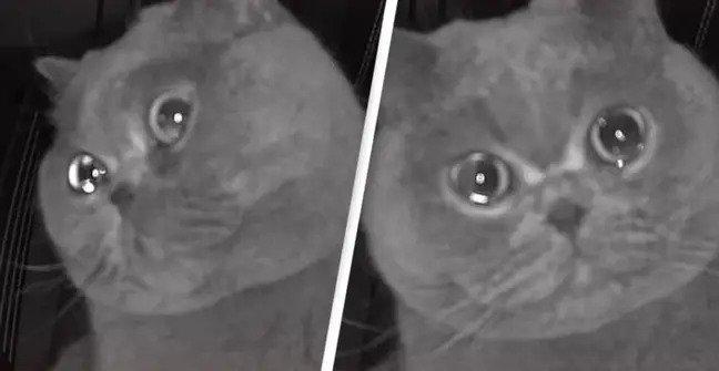 猫が泣いてる!帰らなきゃ!帰省中涙を浮かべている猫の姿が監視カメラに映り予定を早めて帰宅した飼い主