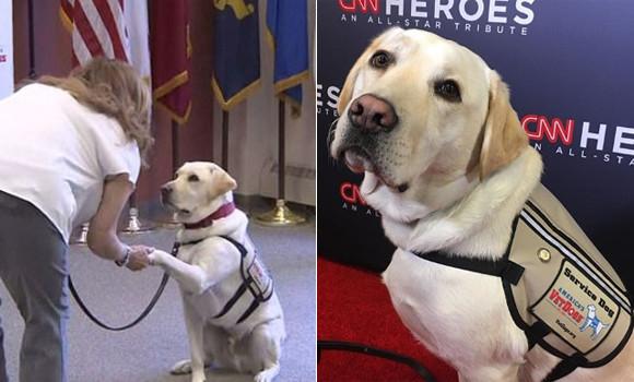 ブッシュ元大統領と最後まで一緒にいた介助犬のサリー、次の任務は退役軍人のサポート(アメリカ)